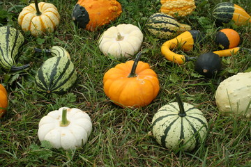 Squashes and Gourds on the grass