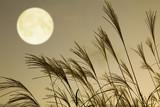 Fototapety ススキと満月