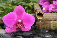Source de fleur