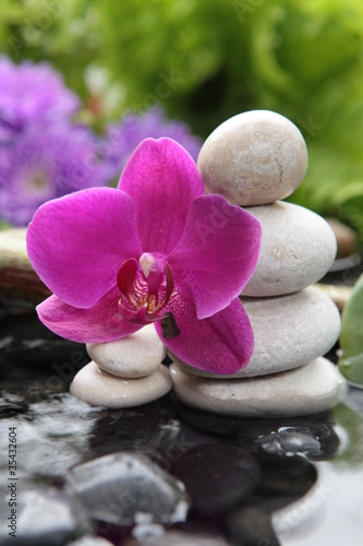 Fototapeten,orchidee,asien,aroma therapy,ashtray