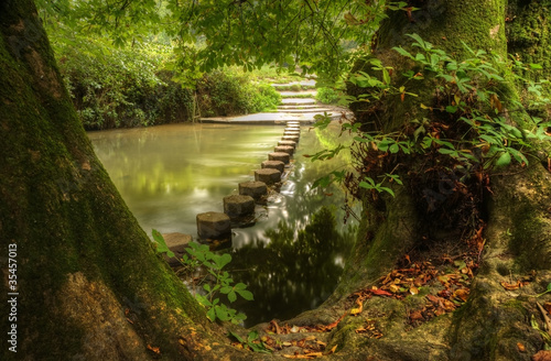Beautiful forest scene of enchanted stream flowing through lush