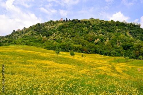 Prato con fiori gialli in collina
