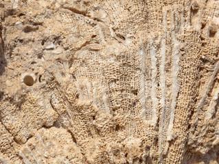 Coastal limestone aged