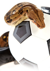 soccer concept ,  football and snake