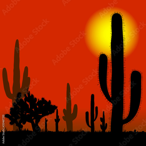 cactus in desert vector illustration