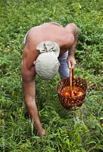 Farmer Harvesting Vegetable