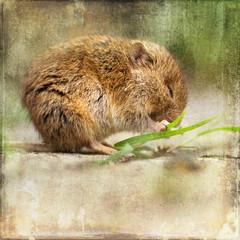 putzige Maus beim Knabbern