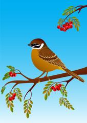 sparrow sitting on a branch of ripe rowan