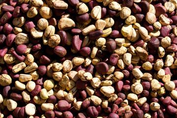 Kola Nut (Cola).
