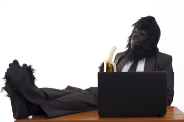 Gorilla relaxing in his office job, white background.