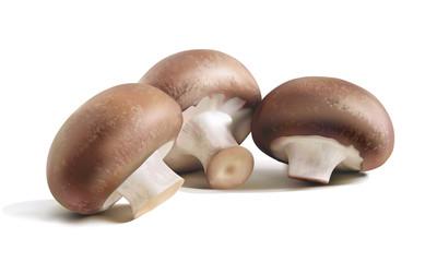 mashroom champignon