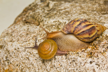 two snails on the rock
