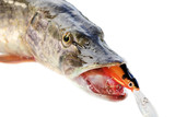 jaws of a pike with wobbler poster