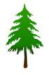 Baum Fichte Tanne