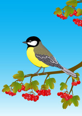 tit on a viburnum branch with  fruit and leaves