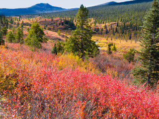 Fall in northern wilderness, Yukon T, Canada