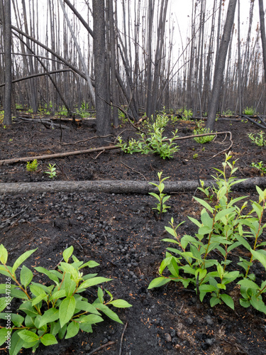 Recent burn of boreal forest