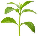 Stevia plant cutout