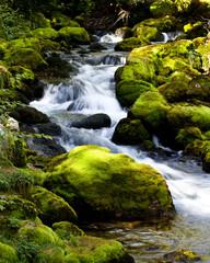 Kleiner Bach fliesst zwischen Moos auf Steinen