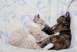 Gatos abraçados poster