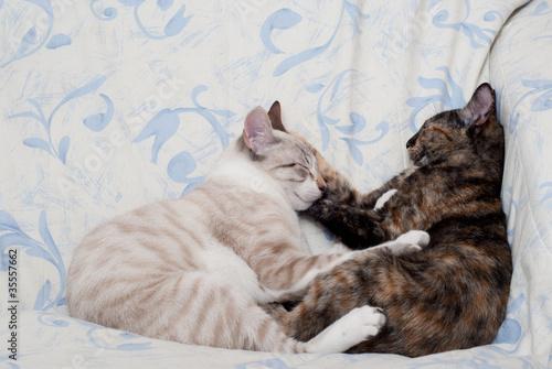 Gatos abraçados
