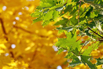 Autumn contrasts