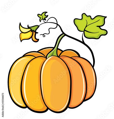 单个大孤立对象干彩色成熟插图收获曲线月植物树叶橙色水果没有人漩涡