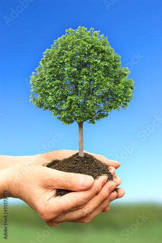 Hand holding green tree in nature