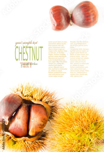 Chestnut background
