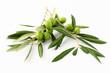 Ramoscelli di ulivo e olive