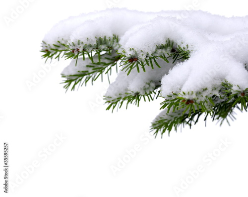 Christmas tree with fresh snow