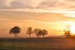 Fototapeten,ackerbau,abenddämmerung,farmland,getreidefeld