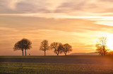 Fototapety Trees at sunset with walker, Pfalz, Germany