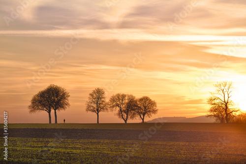 jesienne-drzewa-o-zmierzchu