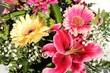 Blumenfreude