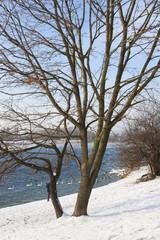 Winter an der Alten Donau/Wien