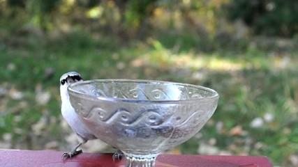 Поползни (Sitta, europaea) на стеклянной вазе