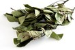 fresh laurel leaves as fragrant spice for cooking