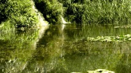 Seerosenteich mit Wasserfällen