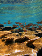 Fish and elkhorn coral