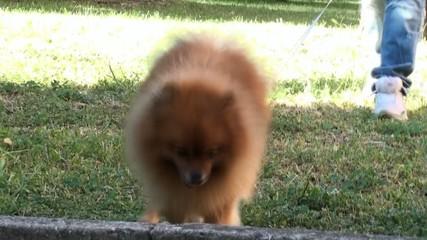 cagnolino al guinzaglio al parco