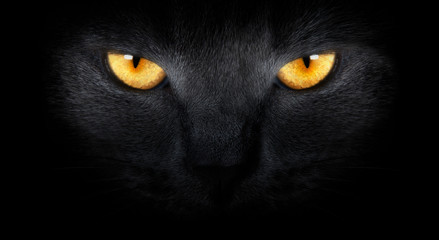 View from the darkness. muzzle a cat on a black background.