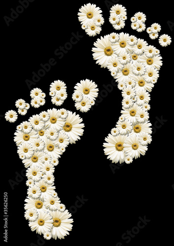 Daisy footprints