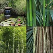 thème des éléments du jardin aquatique zen
