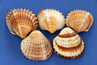 five colorful various sea shells over blue background