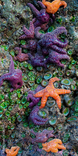 Starfish and Sea Anemone