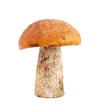 Mushroom isolated on white background