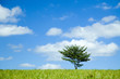 青空と木と草原