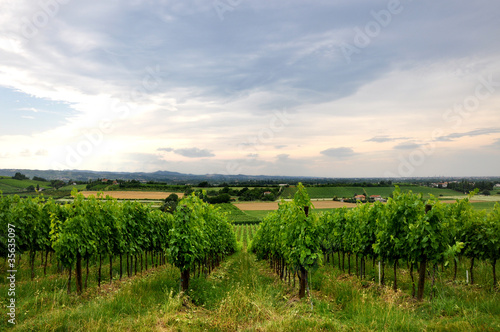 vineyards and fields in Bertinoro, Italy