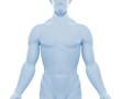 Männlicher Oberkörper - Silhouette
